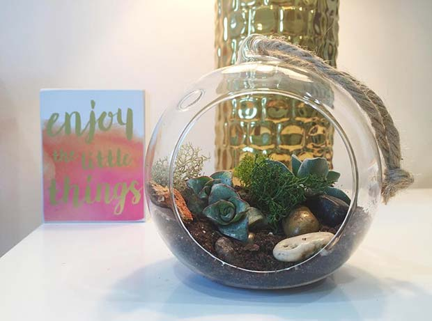 חַג הַמוֹלָד Plant Gift for DIY Christmas Gift Ideas
