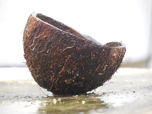A cut coconut
